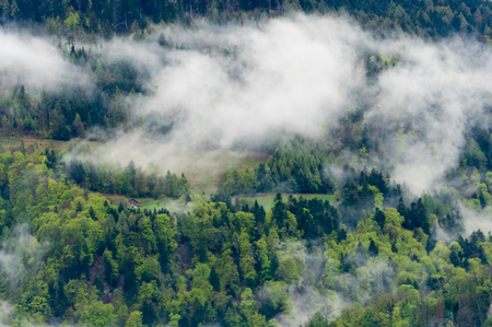 foggy clouds over the St. Margrethenberg forest in the Alps of Switzerland 写真素材