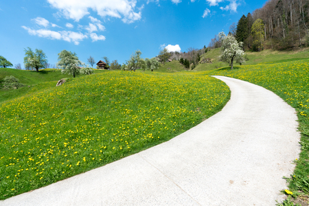 country road leading through spring meadows and orchards with blossoming cherry trees above Lake Zug in Switzerland