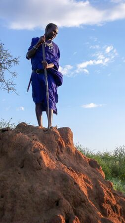 Olpopongi, Kilimanjaro Province / Tanzania: 29. December 2015: young Tanzania Masai warrior in traditional clothing digs in a termite nest with a long wooden pole at sunset