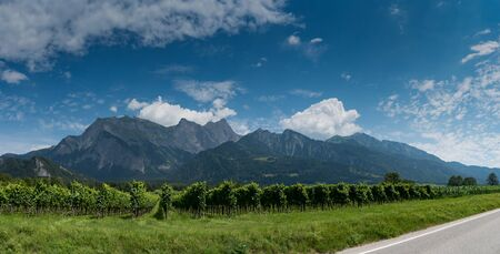 panorama mountain landscape in Switzerland with many rows of Pinot Noir grapevines in the foreground Stockfoto