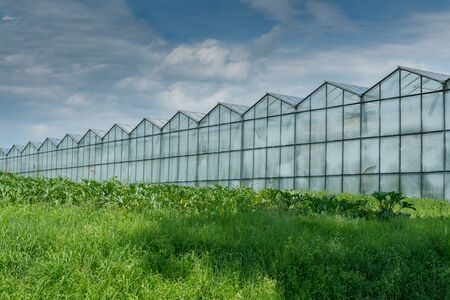 large industrial size greenhouses for growing vegetables and fruit in a green grass field under a blue sky with copy space