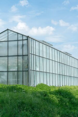 vertical view of large industrial size greenhouses for growing vegetables and fruit in a green grass field under a blue sky with copy space