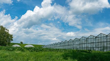 panorama view of large industrial size greenhouses for growing vegetables and fruit in a green grass field under a blue sky with copy space