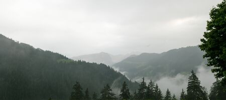 green and gray panorama mountain landscape with forest and thick fog in the valleys and an overcast sky Фото со стока