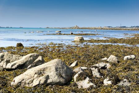 close up view of algae and kelp beds at low tide on an idyllic beach in France