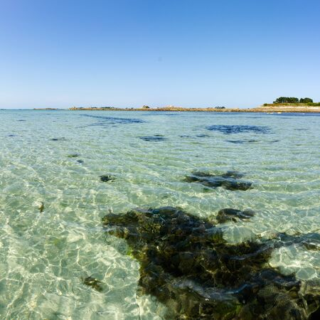 A square format ocean coast and beach landscape with clear water and algae and kelp under a blue sky