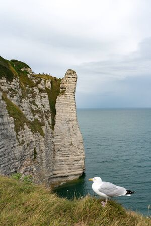 the famous cliffs and rock pinnacles of Etretat on the Normandy coast of France with a seagull in the foreground