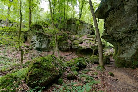 the forest and sandstone in the wolfs gorge canyons of Muellerthal in Luxembourg