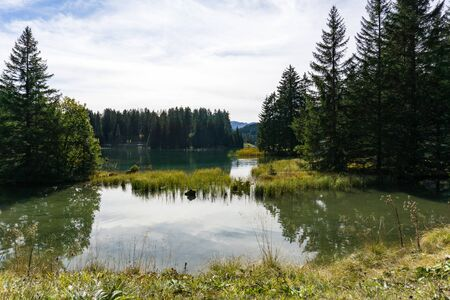 mountain lake surrounded by pine forest in autumn in the Swiss Alps in Lenzerheide