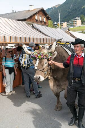 Savognin, GR  Switzerland, - 12 October, 2019: man parading his decorated prize steer at a Swiss village festival 報道画像