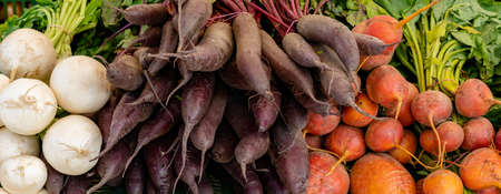 A close up view of organic turnips in different colors and species