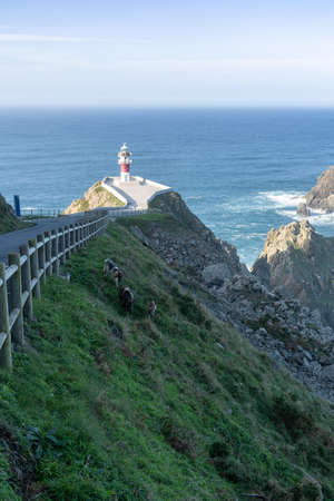 the Cabo Ortegal lighthouse in Galicia with green cliffs and goats