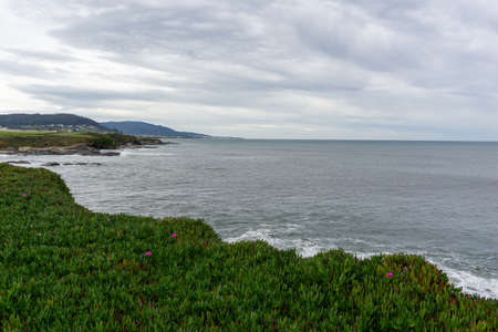 A flower heath and view of the wild coast in Galicia Stok Fotoğraf