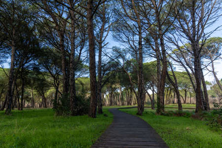 Peaceful forest landscape with long wooden boardwalk leading through the middle of it