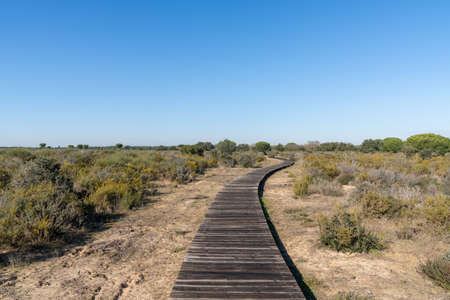 peaceful Donana National Park landscape in Andalusia with a long wooden boardwalk under a blue sky 免版税图像