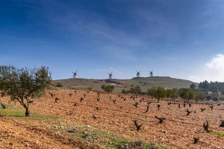 Rich red earth and barren grapevines in a vineyard in La Mancha with whitewashed windmills in the background