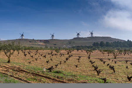 View of barren grapevines in a vineyard in La Mancha with whitewashed windmills in the background Foto de archivo