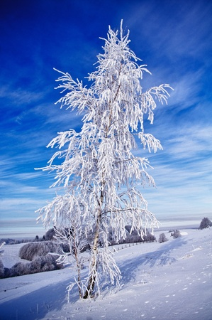 Ice and snow covered birch tree by the ski slope against blue sky