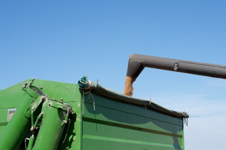 pours: A combine pours grain into a dump truck at dusk during the harvest  Stock Photo