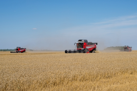 Several Combine Harvesters in the Field  Lithuania photo