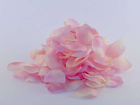 장미 꽃잎