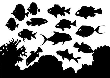 biodiversity: Coral Fish