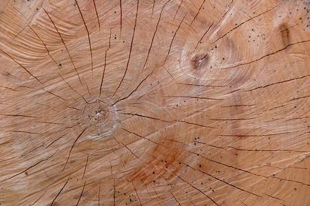 Cut of tree Stock Photo