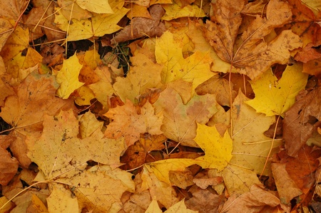 Background made of autumn leaves Stock Photo - 10031014