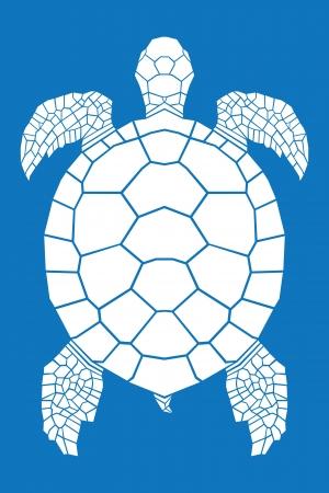 tahiti: Sea turtle