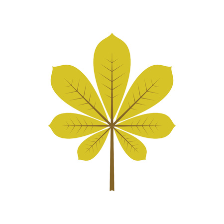 Isolated green leaf of tree. Element of design. Vector illustration. Autumn decoration. Illustration