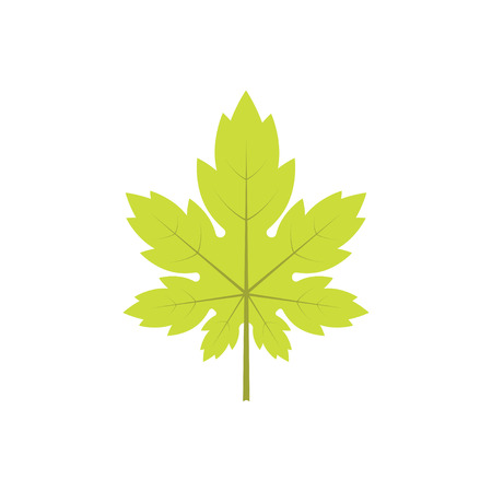 A new spring. Maple leaf on a white background. Vector illustration.