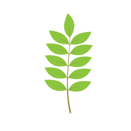Isolated green leaf of tree. Element of design. Vector illustration.