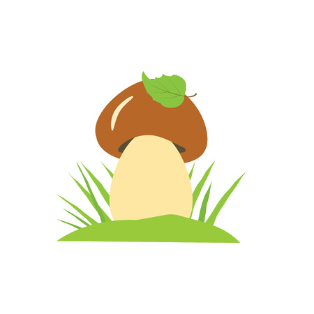 cep: Vector illustration of mushroom with leaf and grass. Mushroom Illustration isolated on white background.