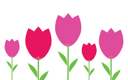 red tulip: Pink and red flowers tulips. Tulip flowers isolated. Purple and pink flowers tulips isolated on a white background Illustration