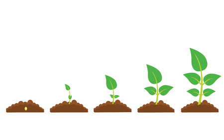 germination: Set of illustrations with phases plant growth. Phases of greenery germination and cultivation. New life and organic concept.
