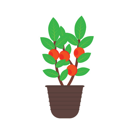 fruit tree: fruit tree in a pot isolated on white background with red red fruits and green leaves