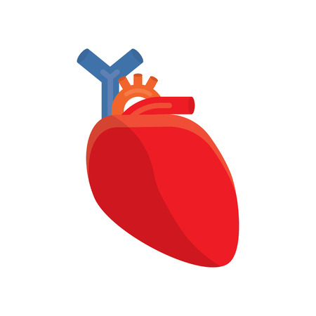 cardiology, human heart. vector illustration on a white background