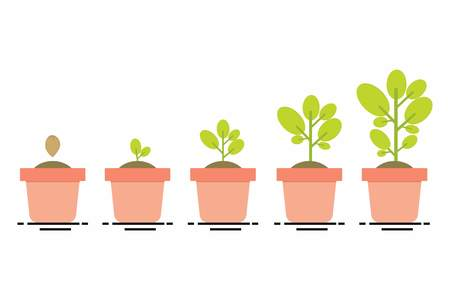plant growing, seedling gardening plant, seeds sprout in ground, phases plant growin, evolution concept