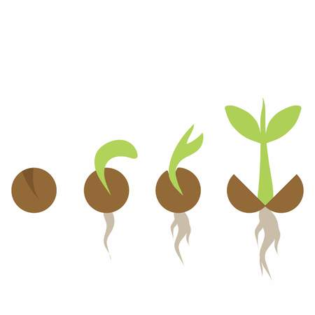 Set of illustrations with phases plant growth, plant seedling growing in soil