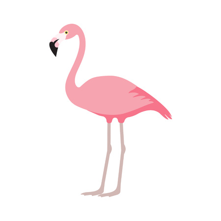 cute: Pink flamingo illustration.