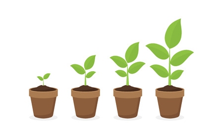 growing plant in process, concept of planting process in flat design, how to grow tree from the seed in the garden easy step by step. Vector illustration Illustration