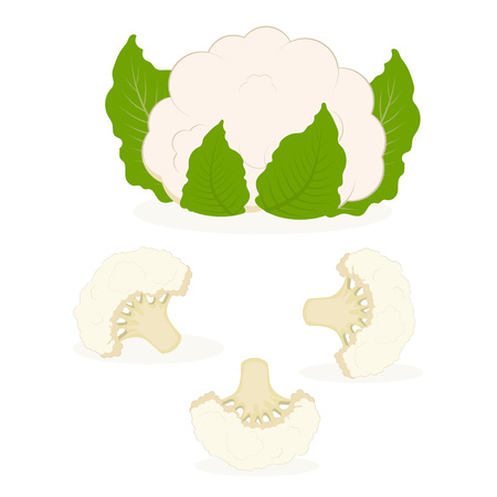 set of whole cauliflower and small pieces, background with cauliflower Illustration