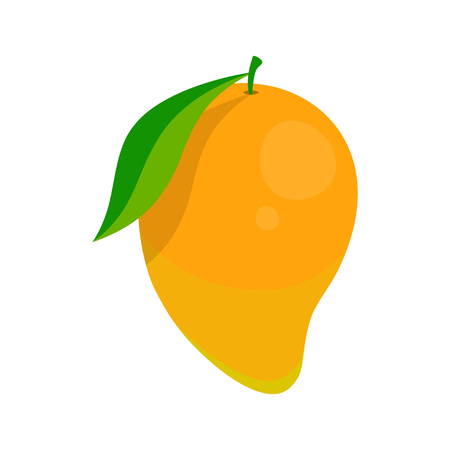 mango vector illustration