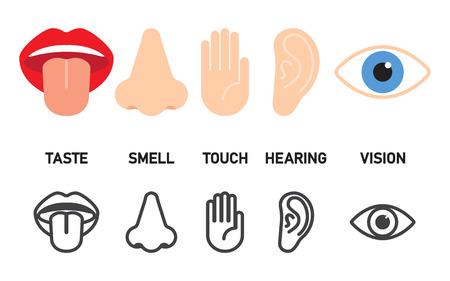 Symbolsatz von fünf menschlichen Sinnenvektorillustration