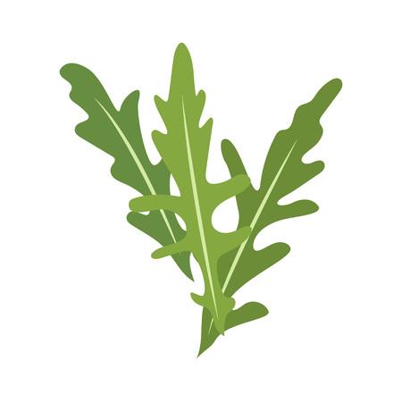 Rucola or arugula icon vector illustration, isolated on white background.