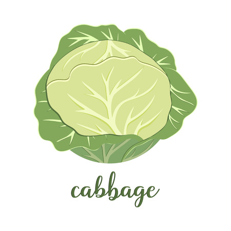 green cabbage isolated on white background, banner with useful vegetable, enriched with vitamins Ilustração