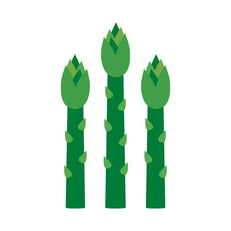 Asparagus green sprouts. Egetarian healthy food. Vector illustration on a white background Illustration