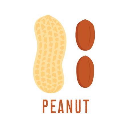 Peanut icon isolated on white background, flat style vector illustration.