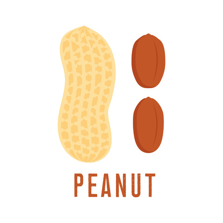 Peanut icon isolated on white background, flat style vector illustration.