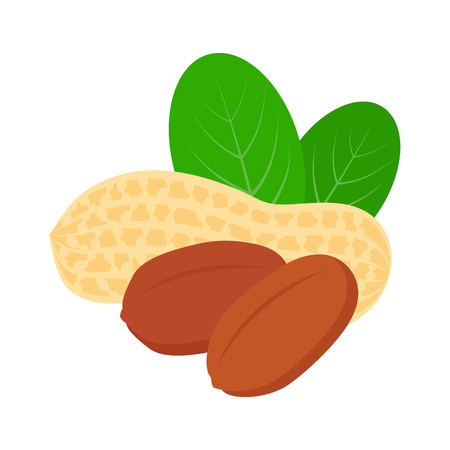 Peanut icon with leaves isolated on white background, flat style vector illustration. Illustration